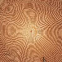 """Kampagne räumt mit Vorurteilen gegen Holznutzung auf: """"Auch digitale Medien haben einen öklogischen Fußabdruck"""""""