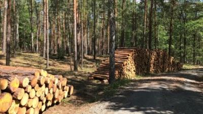 Waldbewirtschaftung und Holzverwendung sind unverzichtbar für den Klimaschutz<br><span style='float:right; font-size:11px;font-weight:normal;'>© DeSH</span>