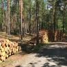 Waldbewirtschaftung und Holzverwendung sind unverzichtbar für den Klimaschutz