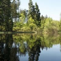 Rohholzverbraucher sehen Aufholbedarf bei Nadelhölzern