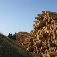 Konkurrenz um Holz: TU München untersucht Auswirkungen